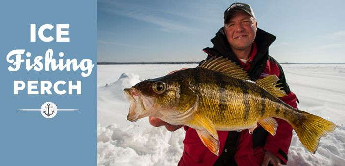 Ice Fishing Perch Feature