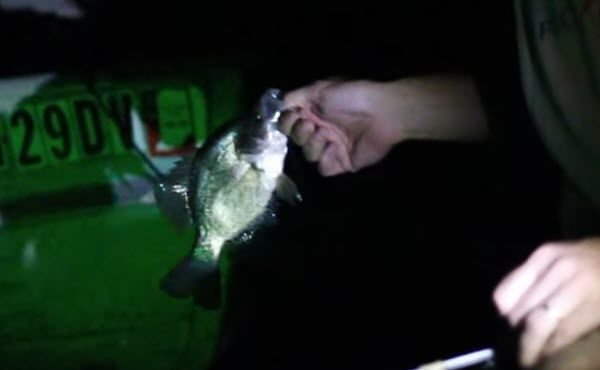 How to Fish for Crappie at Night-Tips and Tricks