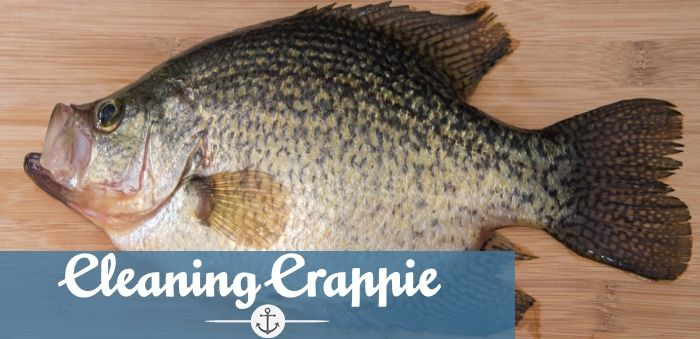 How to clean Crappie fish