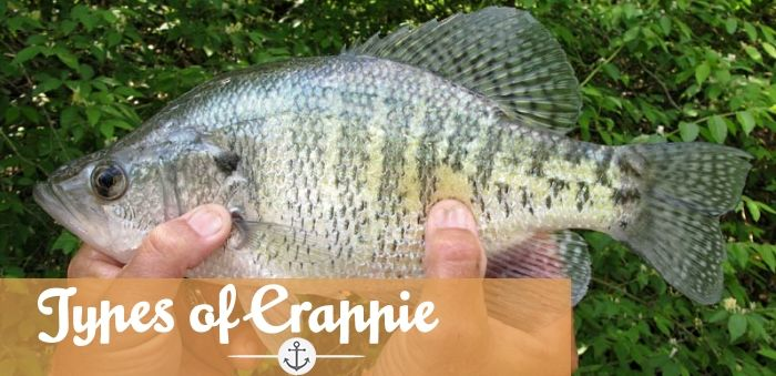 Types of Crappie
