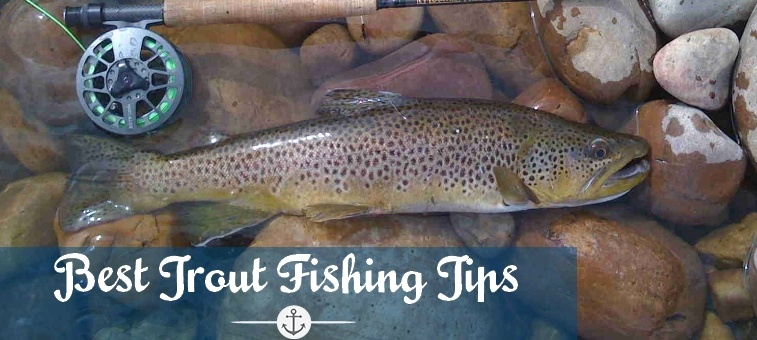 How to Catch a Trout Everytime, when Spinner Fishing your Favourite Stream or River!