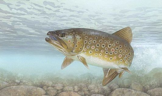Brown Trout Fishing Tips and Tricks