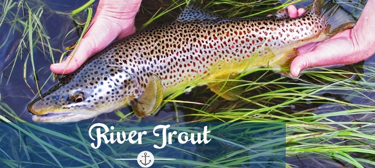 Trout Fishing Tips and Tricks to Catch Any Trout at Anytime!