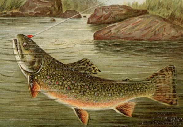 Start Trout Fishing in Missouri