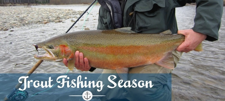 Trout fishing tips and tricks to catch any trout at anytime for Trout fishing season