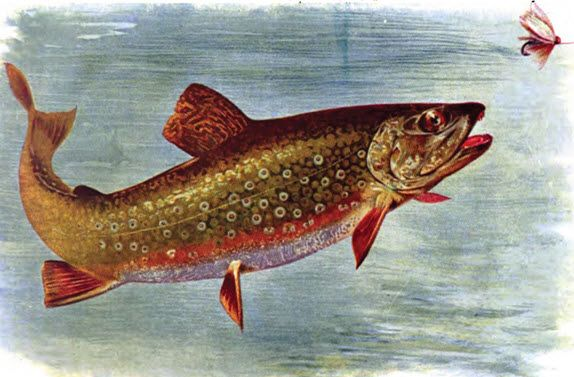 What You Need to Know About Speckled Trout Fishing