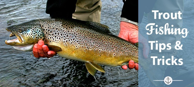 Trout fishing tips and tricks to catch any trout at anytime for Nc trout fishing regulations