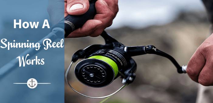 How a spinning reel works